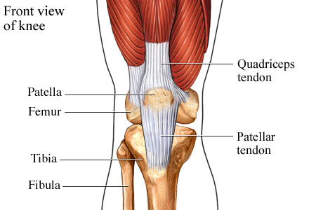 the knee: patella tendinopathy, Cephalic Vein