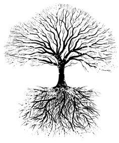 Roots = brain Trunk = spinal cord Branches = nerves