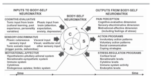 Body Self Neuromatrix