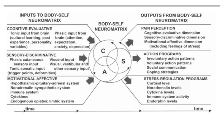 Body Self Neuromatrix